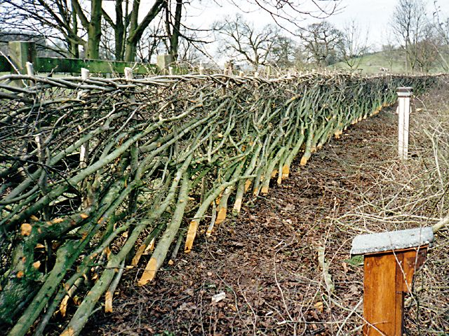 <span>Ref: C5</span><br>The binding along the top of a layed hedge gives a finished line that is pleasing to the eye