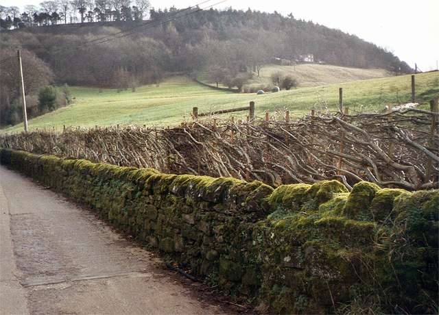 <span>Ref: C1</span><br>Derbyshire style with stakes only.