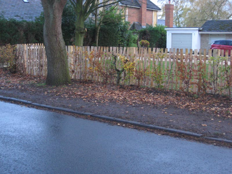 <span>Ref: A38</span><br>This 4' cleft pale fence gives enough light and air to allow the newly planted hedge to grow, Knutsford, Cheshire; materials approx £33.53/metre inc. VAT