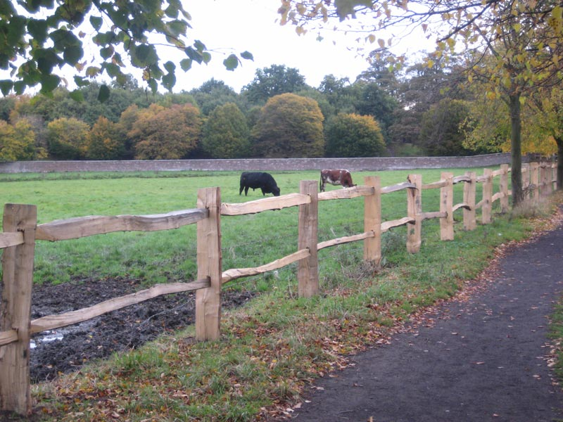 <span>Ref: A20</span><br>This cleft fence is strong enough to prevent the black bull from wandering; materials approx £14.74/metre inc. VAT.